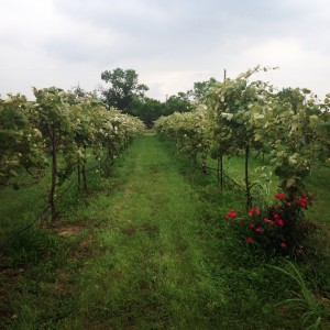 Texas Hill Country Wineries Reviews - Blue Lotus Winery